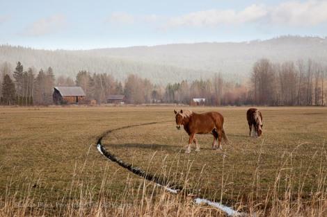 TL-Horses_2741