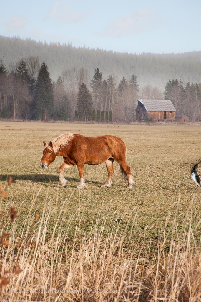 TL-Horses_2745