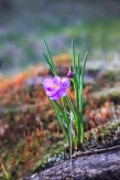 CC-GrassWidows-9022
