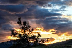 CC-SunsetRays-9199