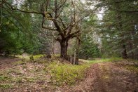 ForestRoad-5465