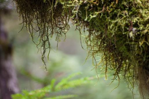 Lichens_1209