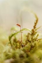 Moss-flower_Underwood-5095