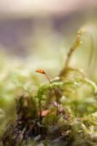 Moss-flower_Underwood-5104
