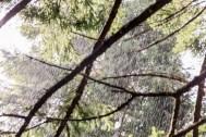 Rain-in-Sunshine-4731