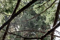 Rain-in-Sunshine_4745