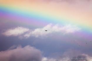 Rainbow-Eagle_7581