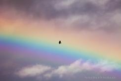 Rainbow-Eagle_7582