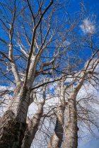 SkatePark-Trees_8905