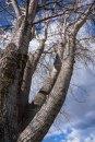 SkatePark-Trees_8906