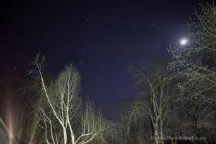 Stars_Feb24-2015-9376