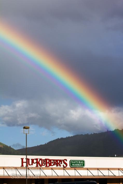 Rosaurs-Rainbow_4843