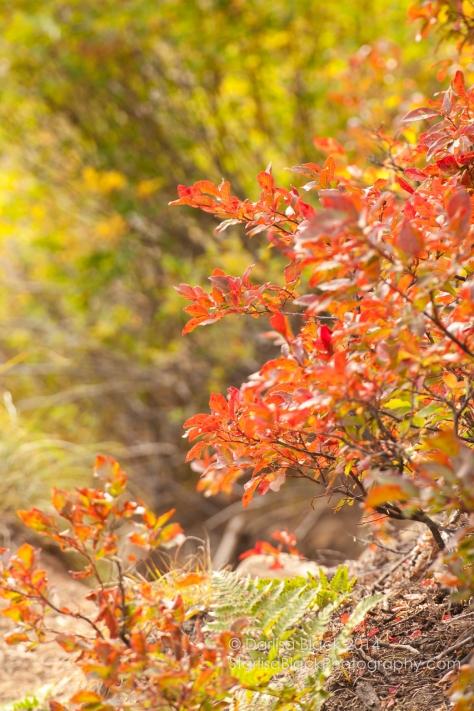 Fall-GooseLake-9-22-2014-4641