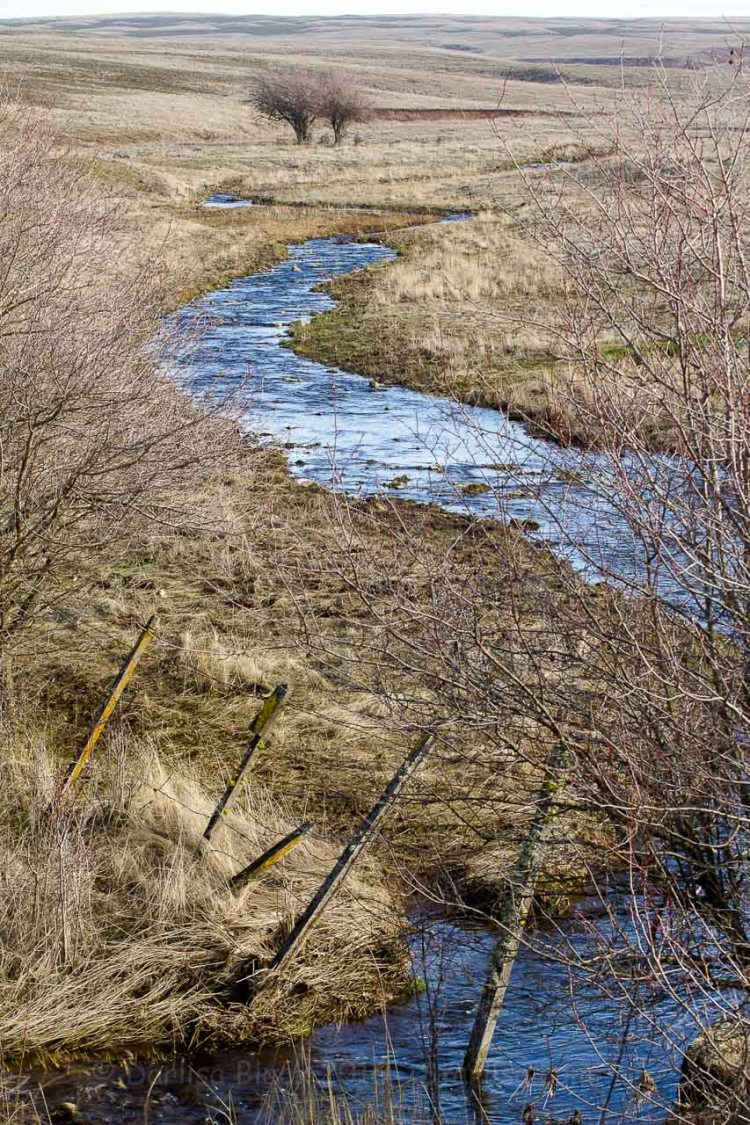 Goldendale_creek_1836