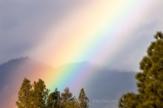 Rainbow-PuckerHuddle_WM_0459 - Copy